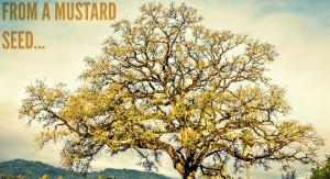 mature mustard seed