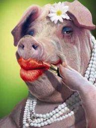 lipstick-on-a-pig